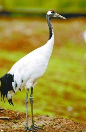 哈尔滨鸟语林动物园动物避暑高招