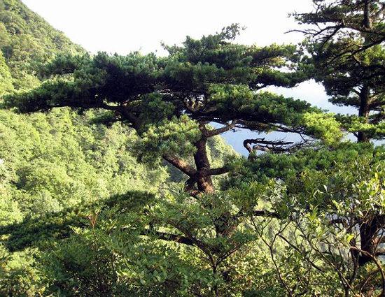 傲然挺立的古树 图片来源:远方网