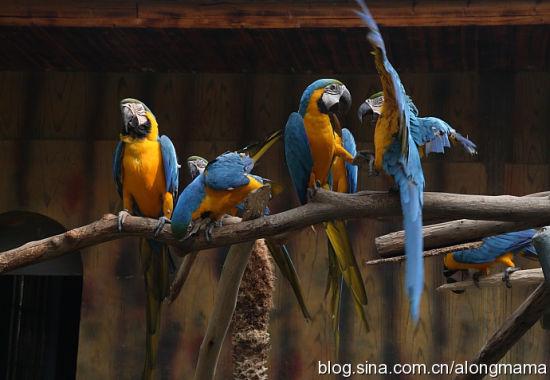 一群灵动可爱的鹦鹉 图片来源:阿龙妈妈 新浪博客