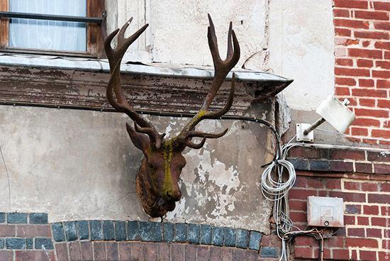 门前的鹿头标志图片