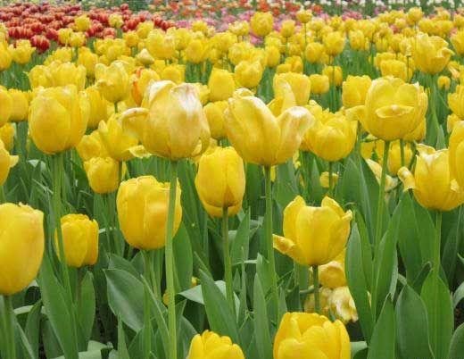 景区里的花儿 图片来源:大罗清水龙 新浪博客