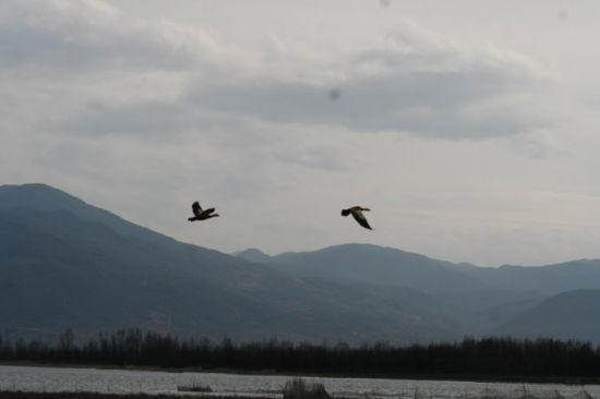 剑湖野生鸟