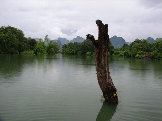 水中的枯树