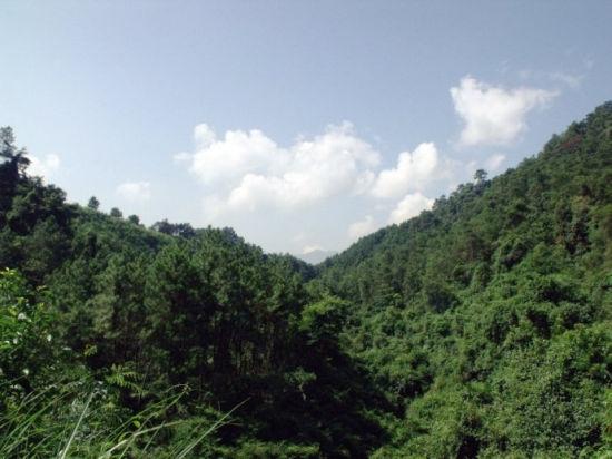 荒山野岭层林叠嶂 图片来源:白鹤茶室 新浪博客