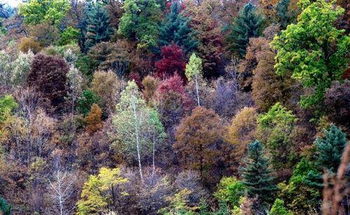 美里的大森林怎么画