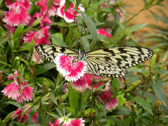 花丛中的蝴蝶