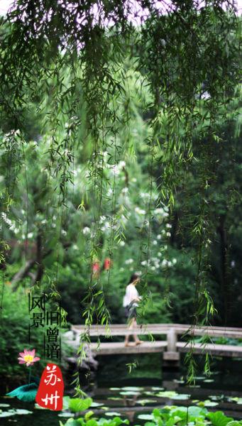 苏州拙政园 风景旧曾谙