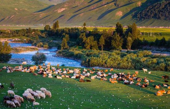 风吹草低牛羊肥美 去新疆天山感受中国之大
