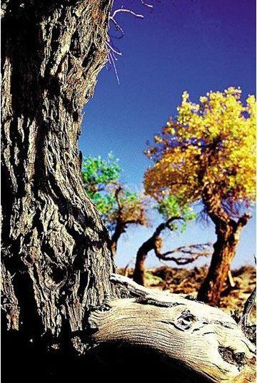 秋季去青海格尔木看最美胡杨林
