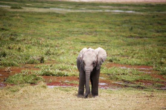一只可爱的小象