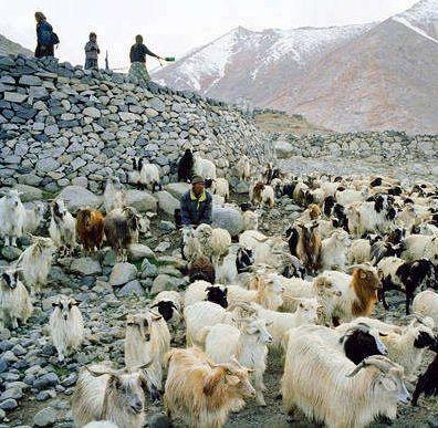 努布拉山谷是每位来到拉达克的旅行者都会前往之地