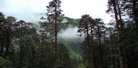 墨脱的原始森林
