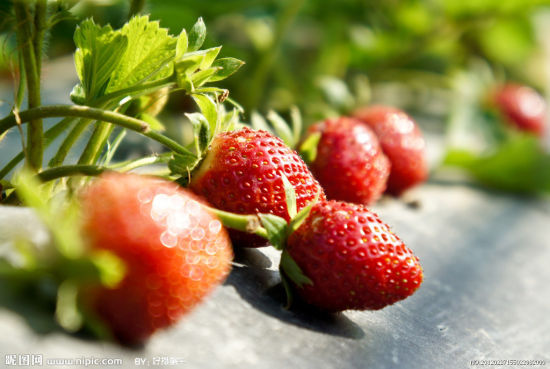 酸酸甜甜最爱你 武汉周边草莓园大搜罗