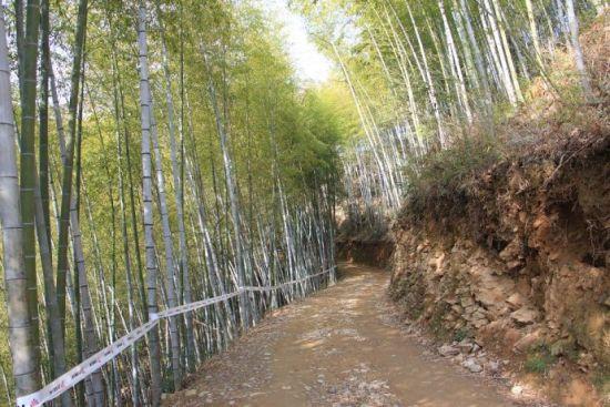 竹海深处有小路