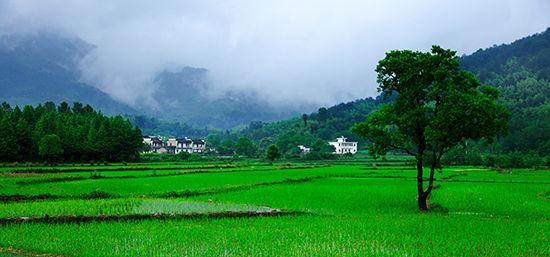 中国 江西 上饶 婺源 正文    这个时候的婺源,色彩的丰富与壮观,改变