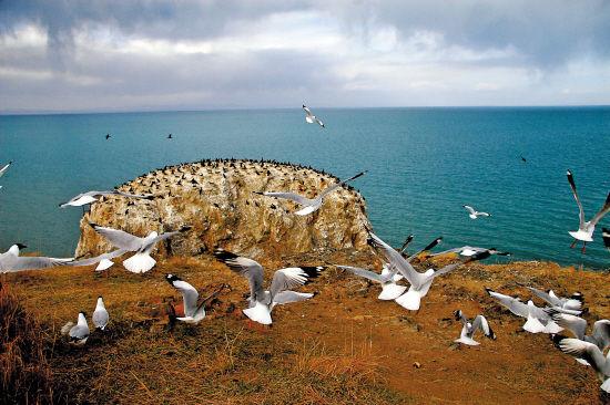 青海湖边风光