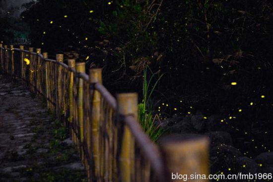 流光溢彩的南靖土楼萤火虫景象