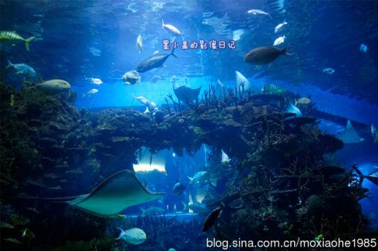 海洋颜色搭配图片欣赏