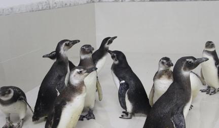 动物园企鹅