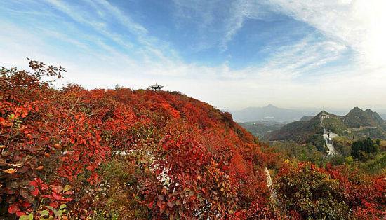长寿山红叶