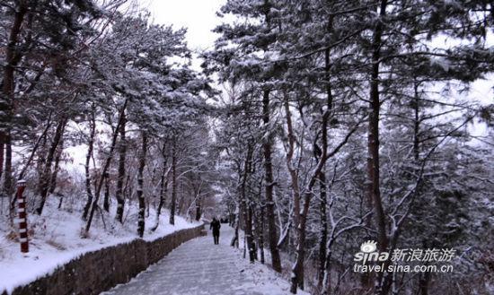 中国 辽宁 本溪 正文    平顶山风景区内有植物174科1116种,主要野生
