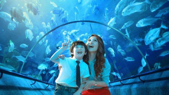 新浪旅游配图:圣亚海洋世界 摄影:图片来自网络