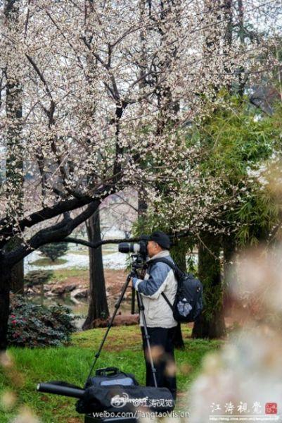 东湖梅园位于武汉市东湖风景名胜区磨山景区南麓,定植梅树2万余株.