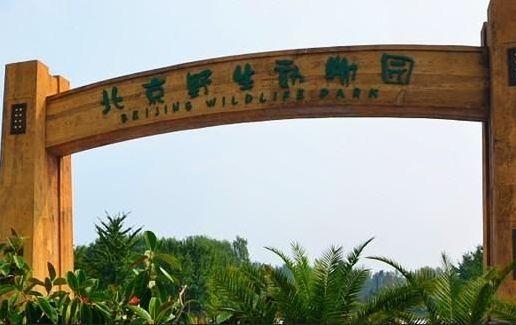 中国首座国家级野生动物园:上海野生动物园