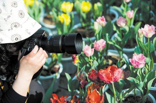 """烈士公园 一位摄影爱好者正在捕捉""""春色""""。"""