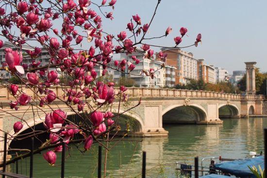 桂湖边上的花儿们 图:两江四湖景区