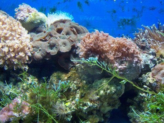 废旧材料手工制作大全海底世界