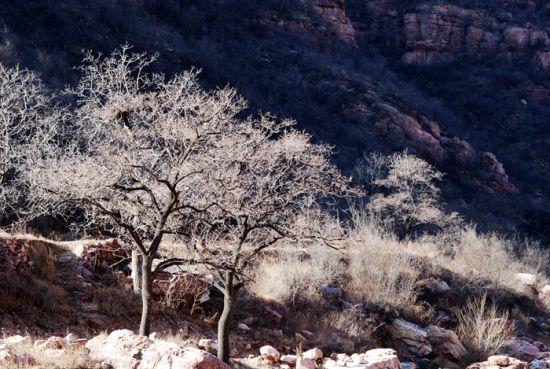 洞阳坡沿途美景 图片来自新浪博主:紫叶秋藤