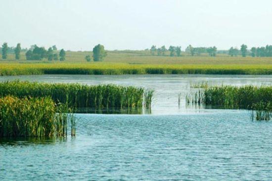 中国 河北 保定 正文    荷花未开之时,白洋淀最大的看点是芦苇,方圆