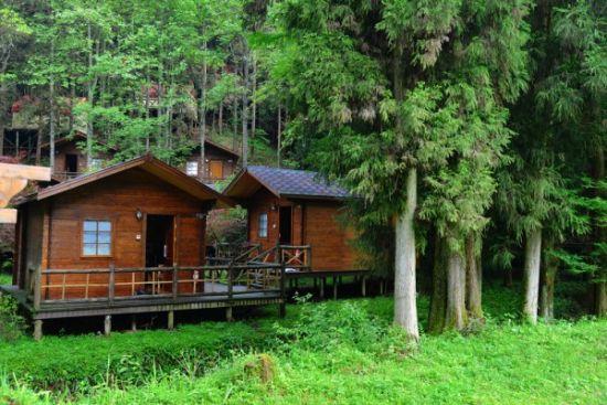 北欧风格的森林木屋和树上的帐篷小屋也很有味道图片