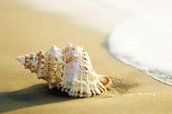 原生态的海边总有惊喜