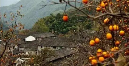 余姚柿林村