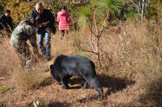 野生动物园圣诞元旦寻蛋大会 小黑熊获桂冠