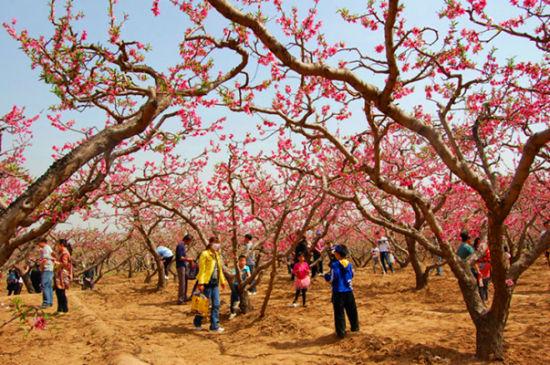 未央区万亩桃花园