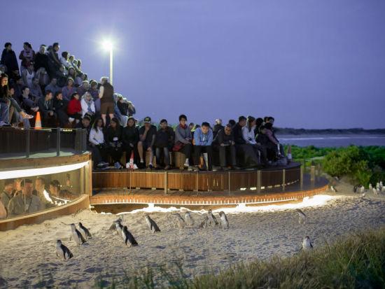 图注:企鹅归巢优等观赏区