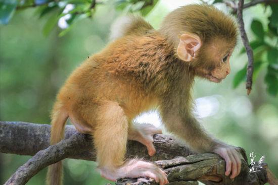 一只流氓猴子抢了两个女孩子的食品袋,应该是猴子从透明塑料袋看到了