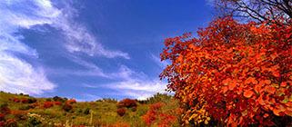 秋季河北22个最美赏红叶景区