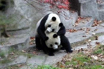 青川熊猫山珍节
