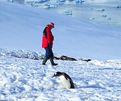 南极行(16) 与企鹅为伴登雪岭