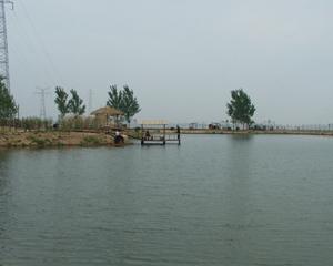 黄河滩岛景区