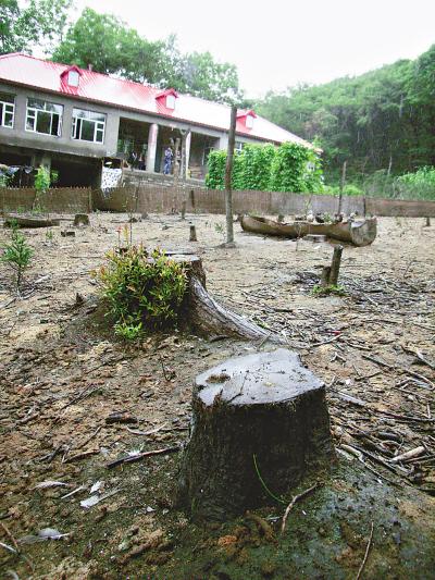 黑龙江龙凤山森林公园内毁林建别墅