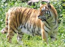 秦皇岛野生动物园