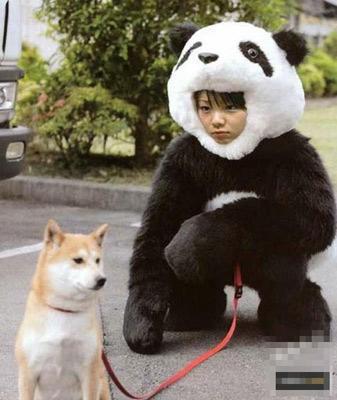 """""""熊猫""""的宠物狗"""
