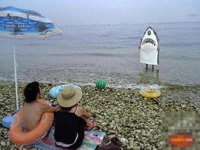 海滩鲨鱼惊魂