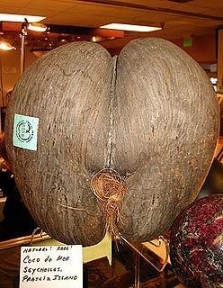 母椰子是塞舌尔著名的纪念品。