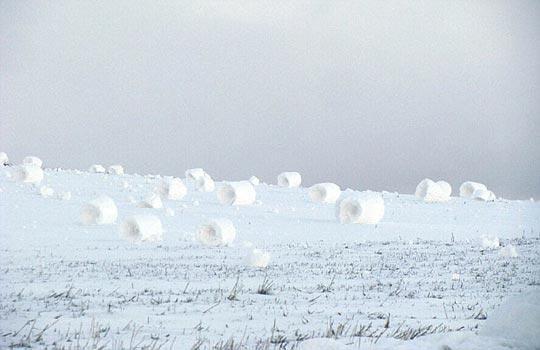 """""""雪卷""""通常是圆柱形,两头是凹面"""